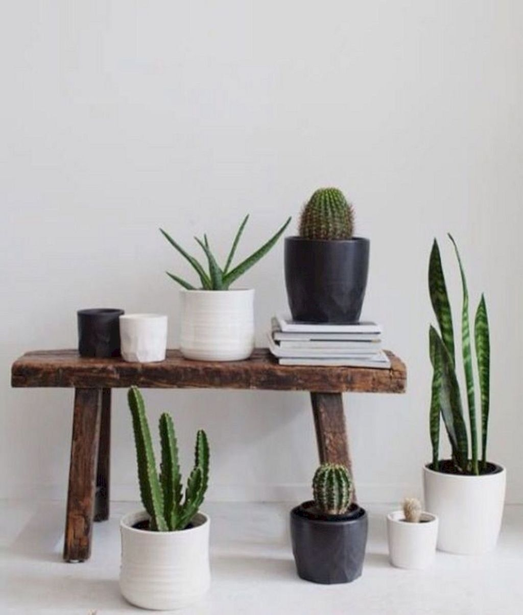 Cool Small Cactus Ideas For Interior Home Design20