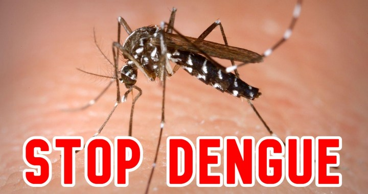 How To Prevent Dengue | ​Protect Your Home From Dengue Mosquitoes