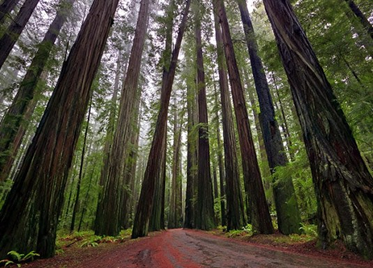 Redwood Trees, Humboldt - Best places to bungee jump - 2018 - TrendMut- USA