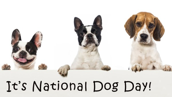 happy national dog's day 2018