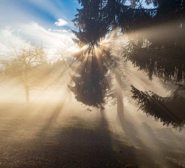 Light Minded Movement