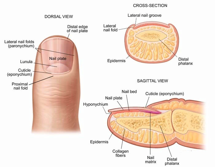 Human Body Outline Injury