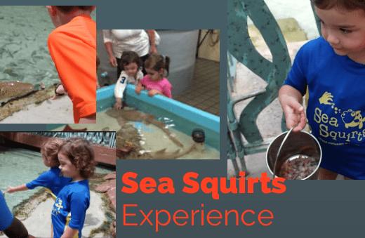 Sea Squirts Atlantis Resort