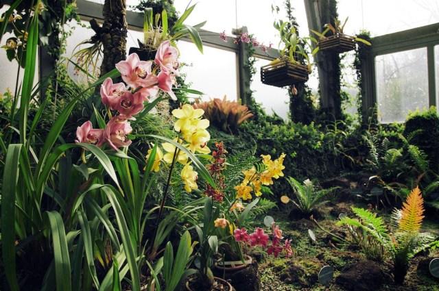 Jardin Botanique de Madrid
