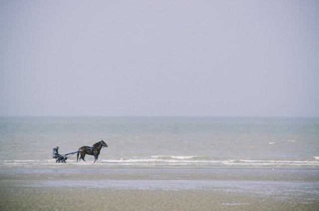 Cheval à Dunkerque au téléobjectif