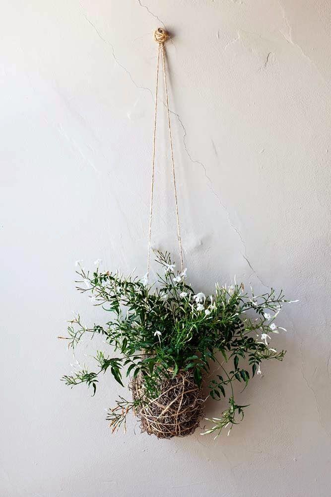 Jasmine-DIY-Plant
