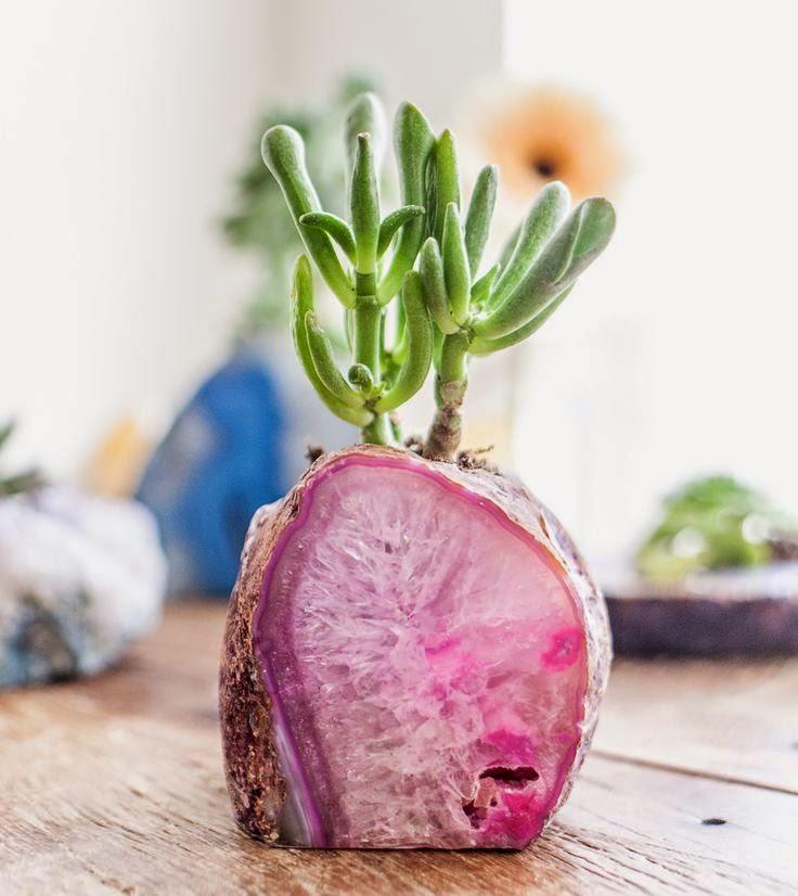 Pin Succulente