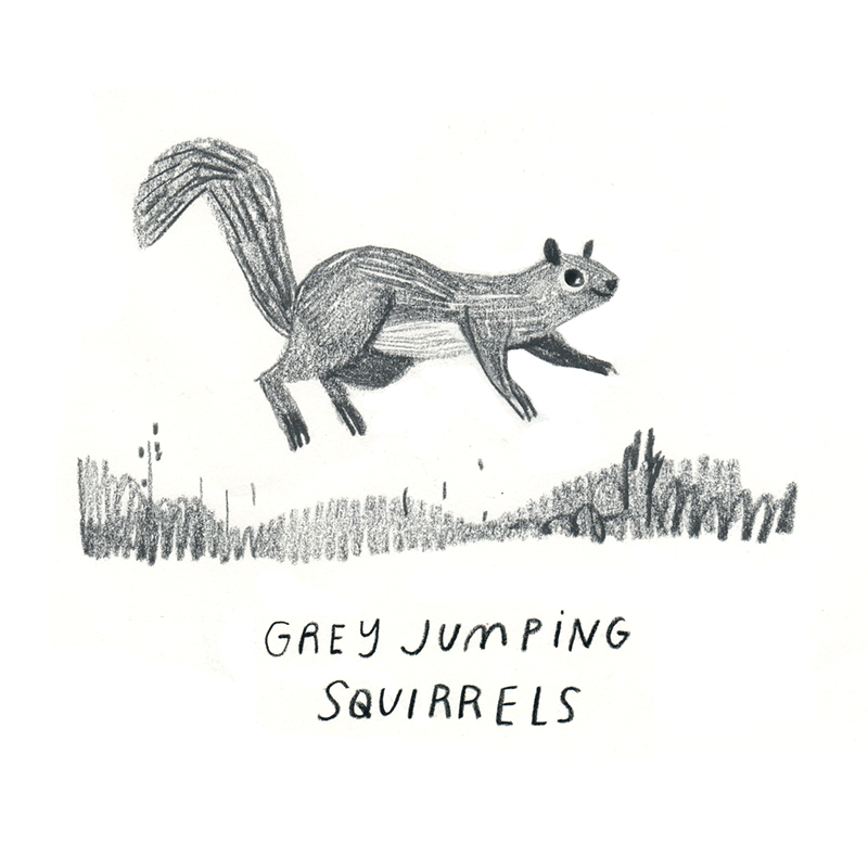 Rebecca Green - Squirrel