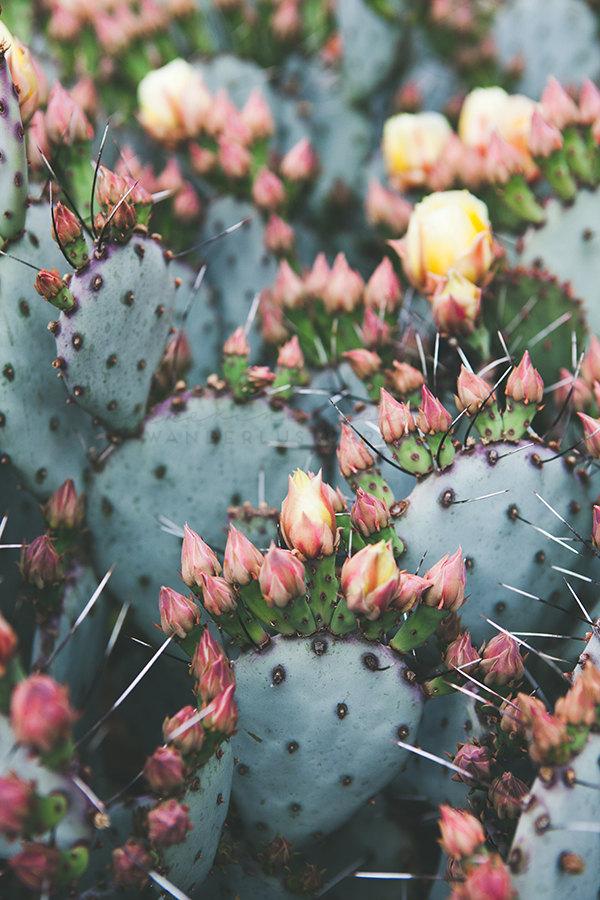 Cactus en Fleurs sur Etsy