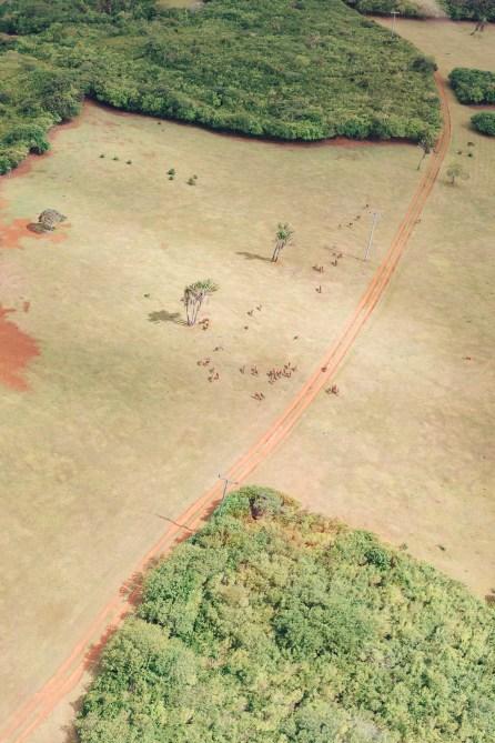 Savane - Ile Maurice - Hélicoptère
