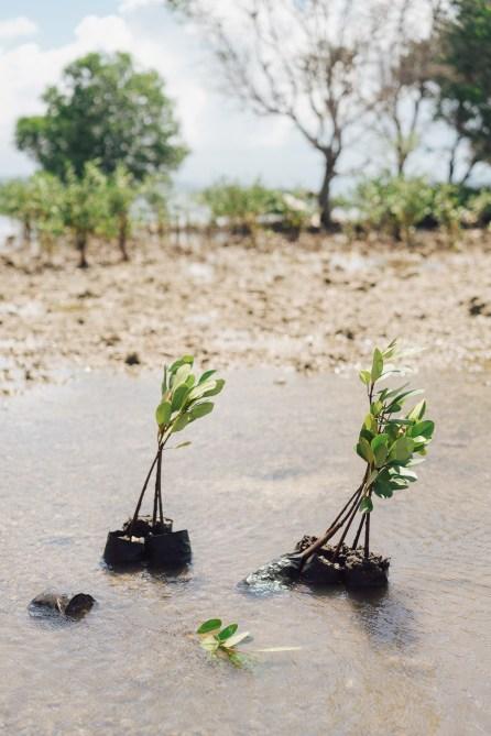 Pur Projet - Avène Eau Thermale - Replantation mangrove - Bali