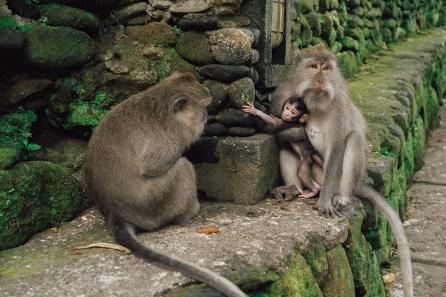 Forêt des singes - Ubud - Bali-1