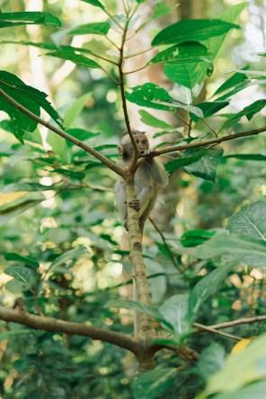 Forêt des singes - Ubud - Bali-19