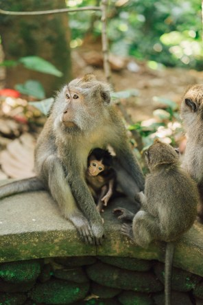 Forêt des singes - Ubud - Bali-21