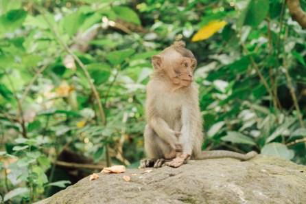 Forêt des singes - Ubud - Bali-4
