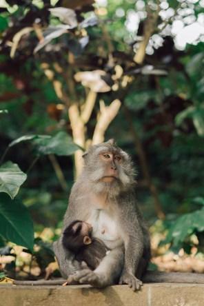 Forêt des singes - Ubud - Bali-7