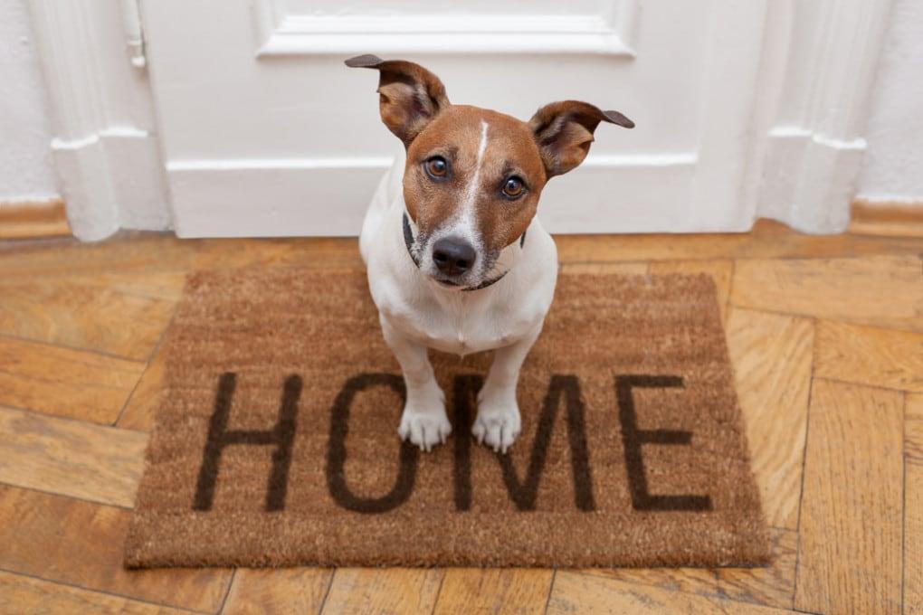 I cani hanno coscienza di sé – Focus.it