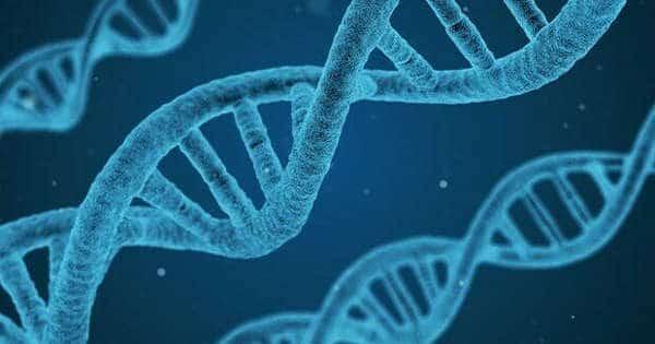 Le cellule convertono Rna in Dna: la scoperta che demolisce il dogma della biologia