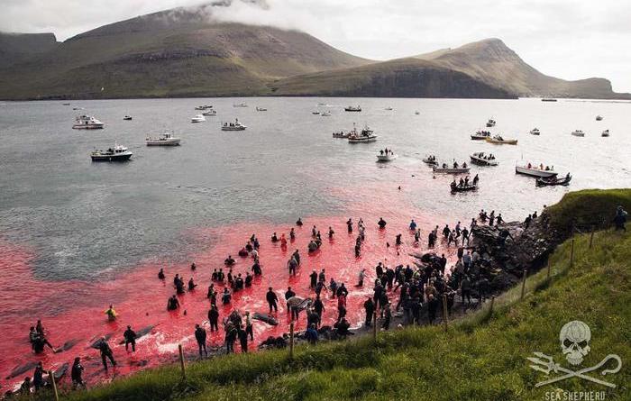 Mattanza di delfini alle isole Faroe, shock e rabbia – Europa – ANSA