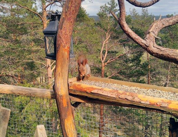 Stemningsbilde-ekorn-i-fuglemater