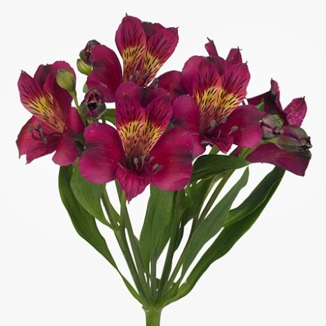 ALSTROEMERIA PURPLE VALLEY
