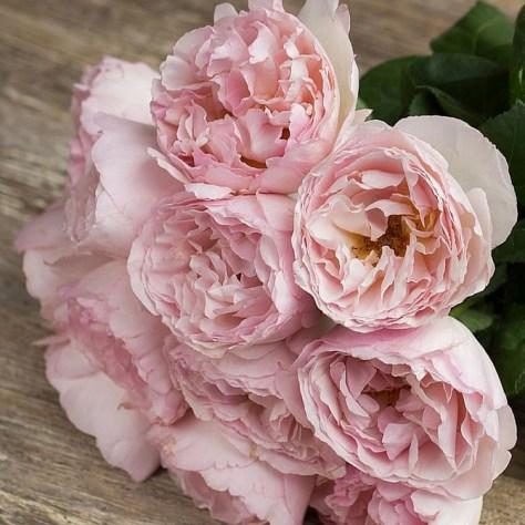 Rose Charlene de Monaco