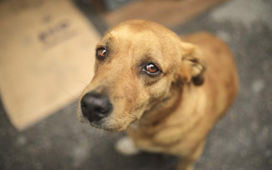 Presidente sanciona lei que proíbe eutanásia de cães e gatos de rua