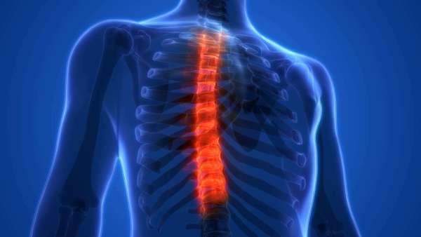 Trifocus fitness academy - vertebrae