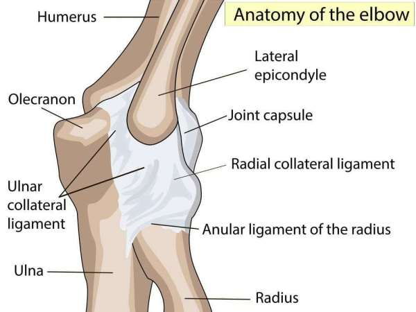 Trifocus Fitness Academy - ligaments