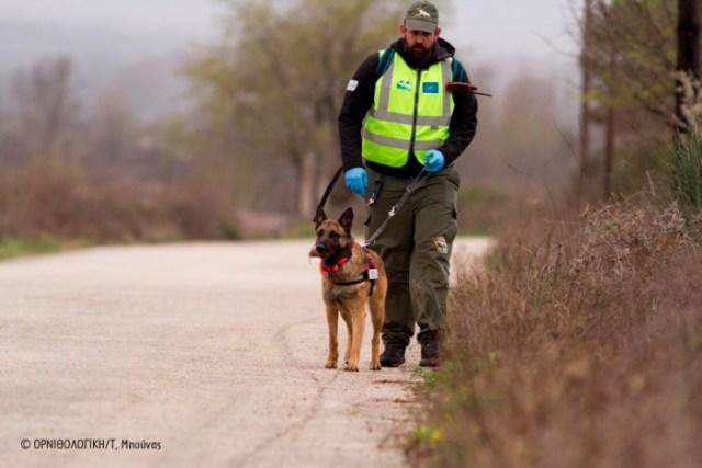 Ο Δημήτρης Βαβύλης με τον Κούκι, τον ειδικά εκπαιδευμένο σκύλο για την ανεύρεση δηλητηριασμένων δολωμάτων