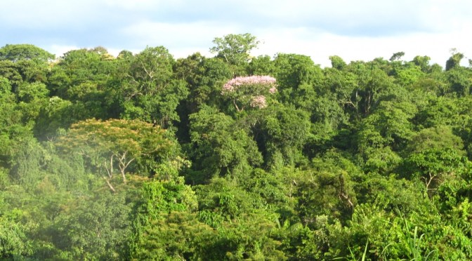 II Pré-Conferência Municipal de Meio Ambiente do Rio será em Vista Alegre