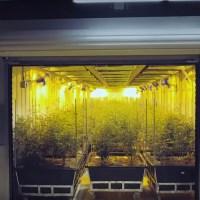 """Marijuana Magnate Berner Explores Seattle in the Third Installment of His """"Marijuana Mania"""" YouTube Series"""