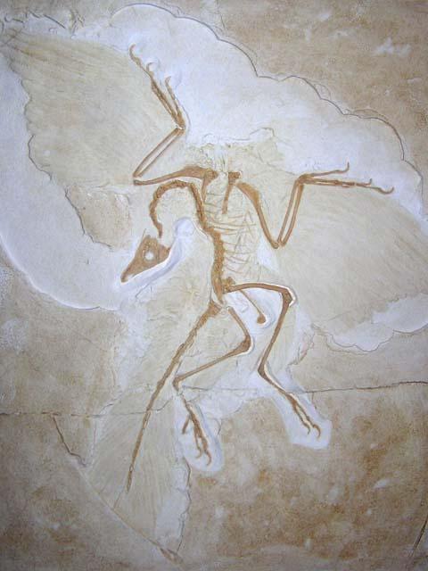 arcaheopteryx