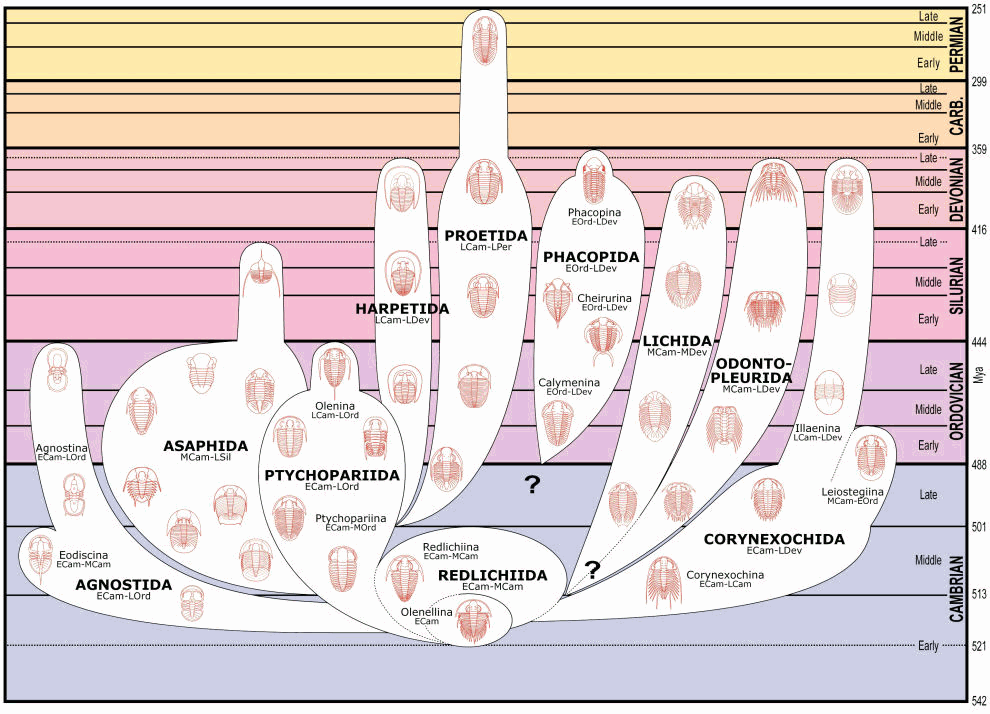 Systematic Relationships and Chronological Extent of the Trilobite Orders
