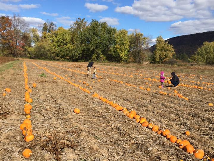 hayride pumpkins