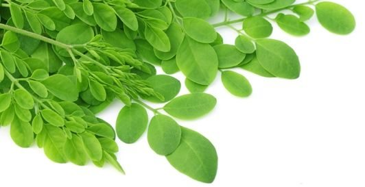 Moringa leaves from deposit photos