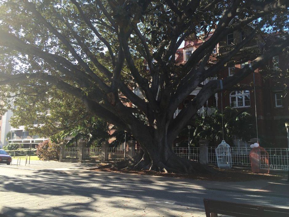 perth-tree