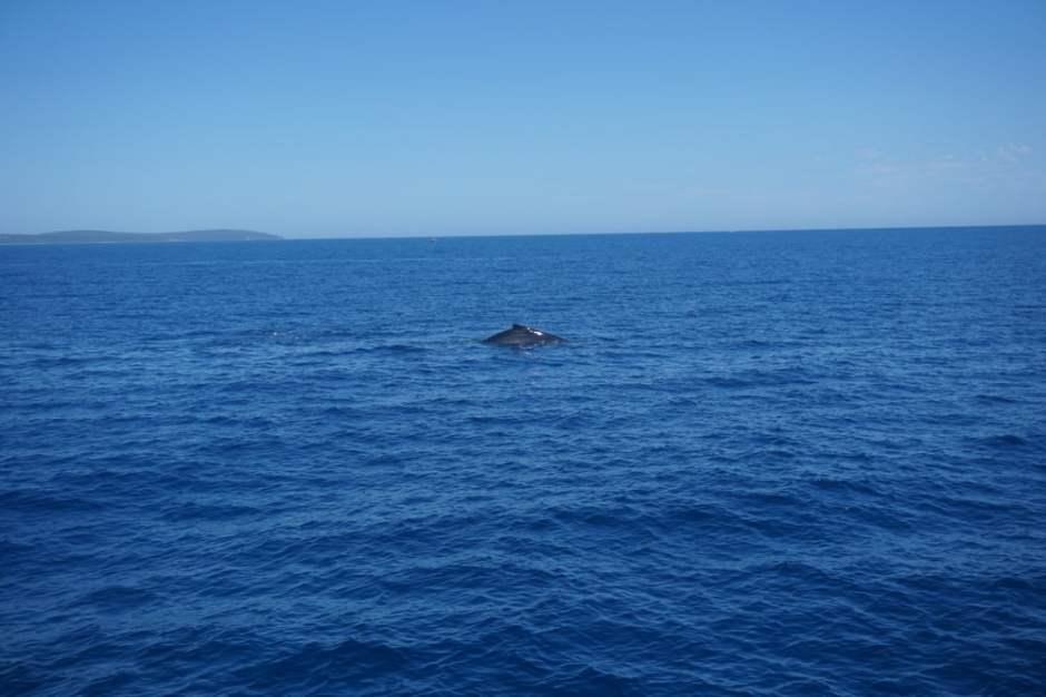 baleine-australie-2