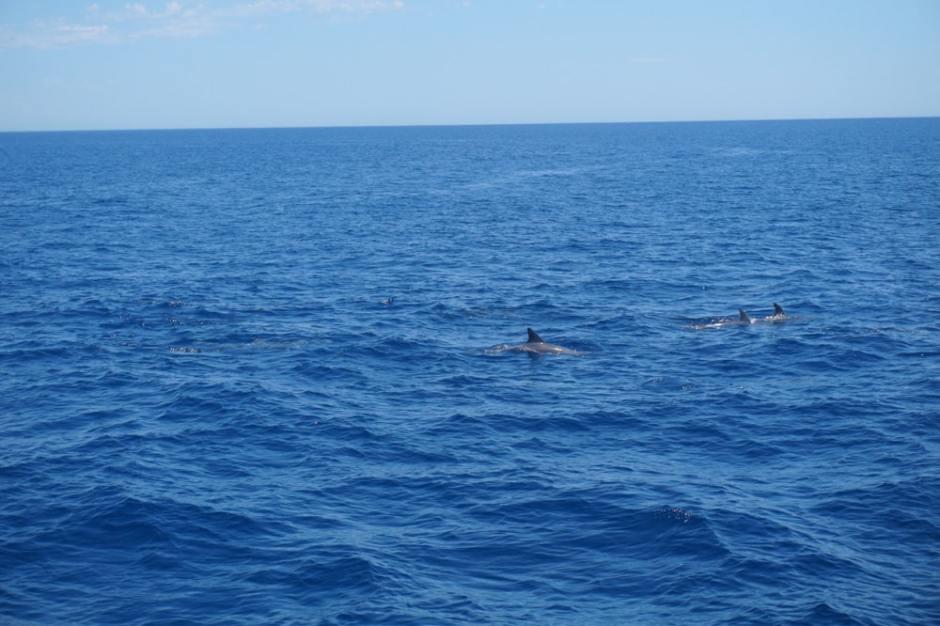 dauphins-australie-1