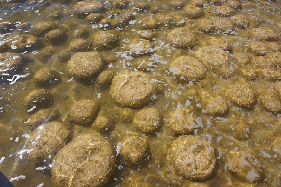 Les stromatolites = thrombolites : ce sont