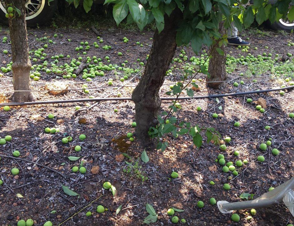 Un exemple du nombre de fruits que nous pouvons enlever.