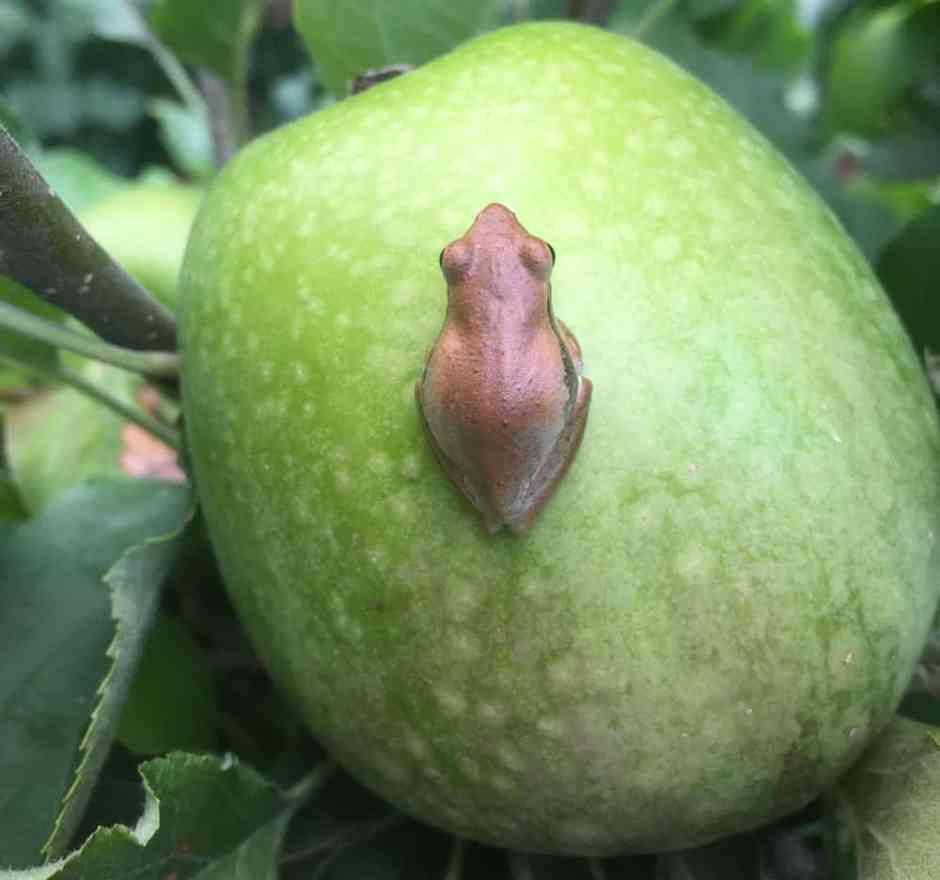 pruning-frog-2