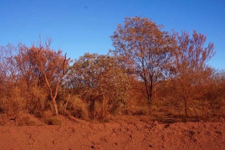 Les arbres en bord de route