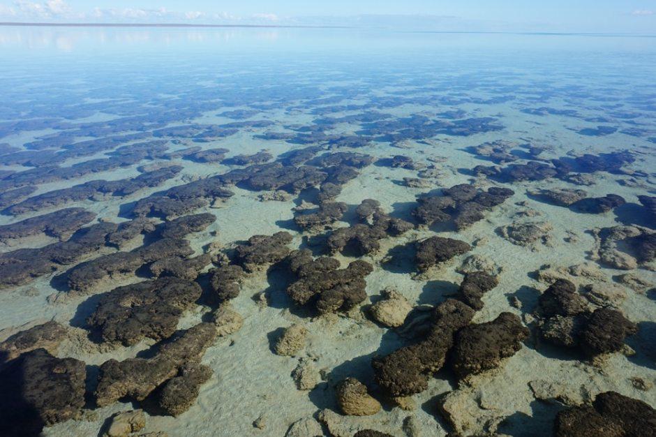 hamelin-pool-stromatolithes-3