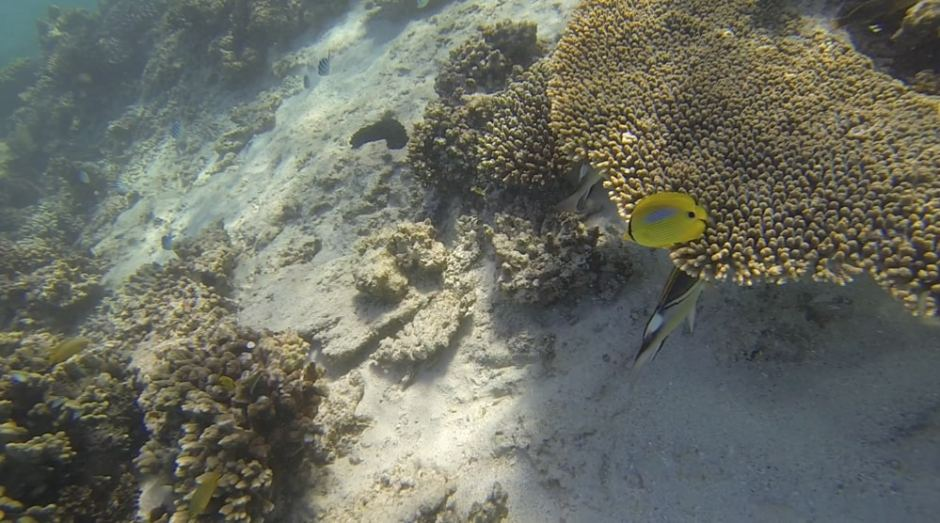 oyster-stacks-snorkelling-4