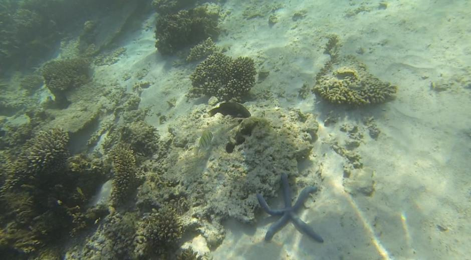 oyster-stacks-snorkelling-6