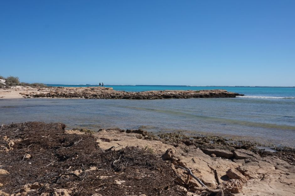 Pilgramunna : Paradis des pêcheurs