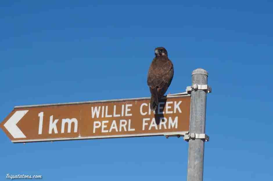 willie-creek-farm-1