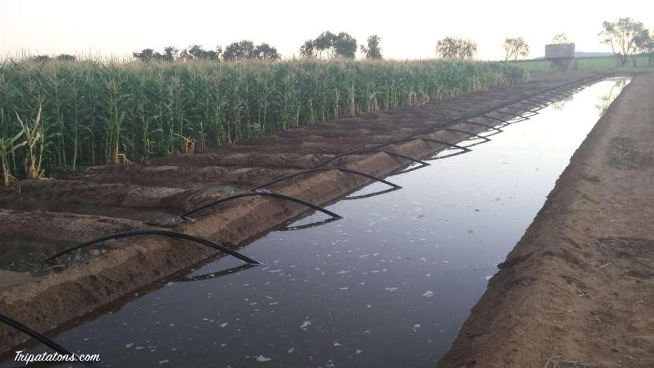 irrigation-system-kununurra-2