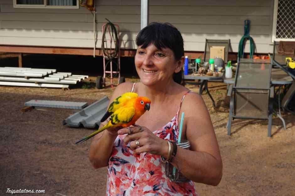 kangaroo-haven-parrot